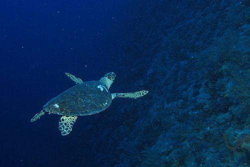 アースポリシー研究所「近年の増加後も海洋公園は大洋の3%未満」