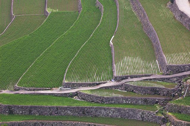 レジリエンス向上の取り組み~農業の底力=「食料自給力」 にも注目!