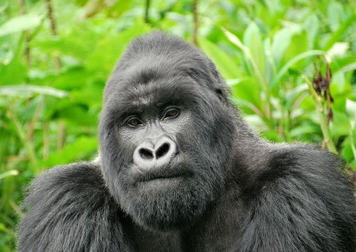 このままでは世界の野生生物の数は2020年までに1970年から3分の2減少~「Living Planet Report 2016」より