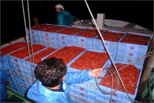 漁獲量を増やさなくても売上は増やせる!―「持続可能な発展」に向けての駿河湾の桜エビ漁の取り組み