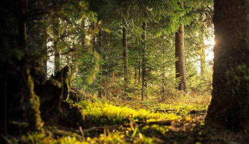 「生態系を踏まえた新たな経済理論をどのように再設計するか」