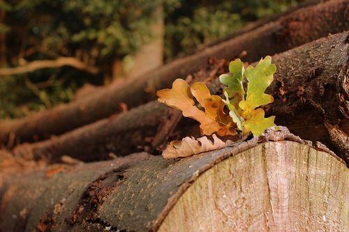 北海道・下川町の持続可能な森林経営を支える、15年一貫の森林環境教育」