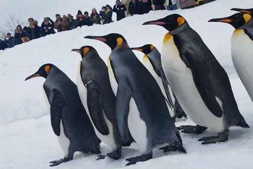 「この時代における動物園の果たす役割とは?」―旭山動物園の坂東園長に聞く