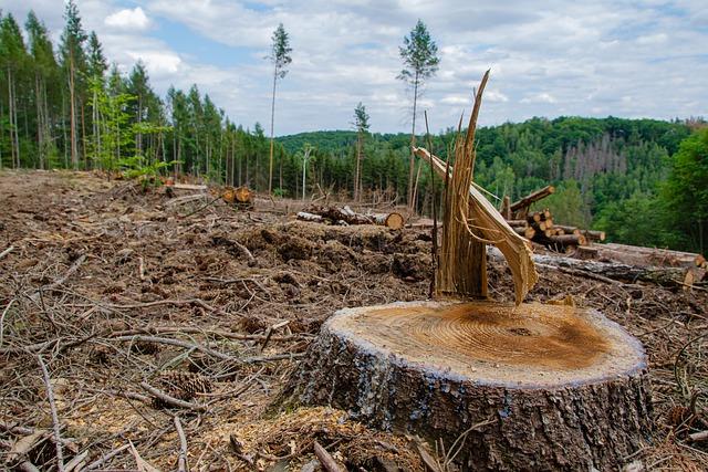 土地利用の改変と土砂災害・気候変動