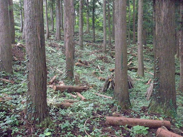企業の森林保全活動に必須の3つの視点とは?